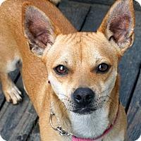 Adopt A Pet :: Redd - Salem, OR