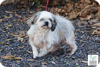 Lhasa Apso Mix Dog for adoption in Newburgh, Indiana - Morris