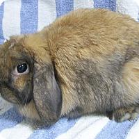 Adopt A Pet :: Libby - Harrisburg, PA