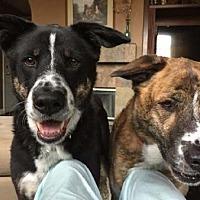 Adopt A Pet :: Jax - Irvine, CA