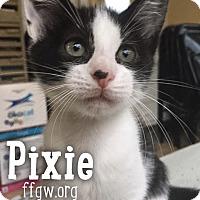 Adopt A Pet :: Pixie - Merrifield, VA