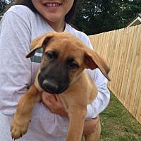 Adopt A Pet :: Shane - Greeneville, TN