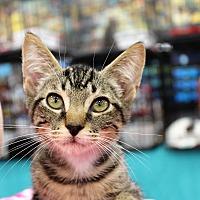 Adopt A Pet :: Ipsey - Wichita Falls, TX