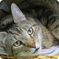 Adopt A Pet :: TJ - Quilcene, WA