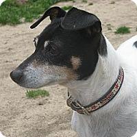 Adopt A Pet :: Emma - Thomasville, NC