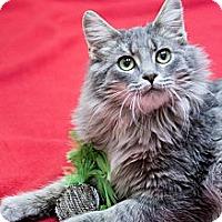 Adopt A Pet :: Rex - Chicago, IL