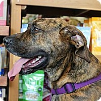 Adopt A Pet :: Lilly - Hastings, NY