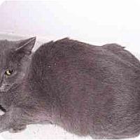 Adopt A Pet :: Omicron - Alexandria, VA