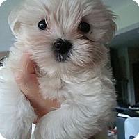 Adopt A Pet :: Tres - Fort Lauderdale, FL