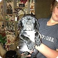 Adopt A Pet :: Dee - Geismar, LA