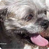 Adopt A Pet :: Bola-NJ - Mays Landing, NJ