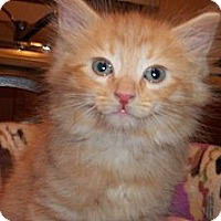 Adopt A Pet :: Crush - Acme, PA