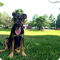 Adopt A Pet :: Cali- So sweet - Marlton, NJ