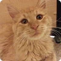 Adopt A Pet :: Antonio - West Dundee, IL