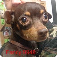 Adopt A Pet :: Fancy - Greencastle, NC