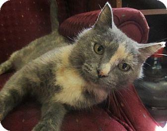Domestic Shorthair Cat for adoption in Lloydminster, Alberta - Gertrude