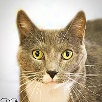 Adopt A Pet :: Roxy - Belton, MO