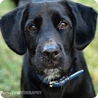 Adopt A Pet :: chance - Miami, FL