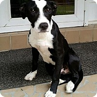 Adopt A Pet :: Maka - Union City, TN