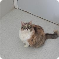 Adopt A Pet :: Geraldine - Orillia, ON