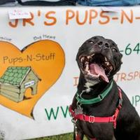 Adopt A Pet :: Eddy - West Allis, WI