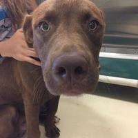 Adopt A Pet :: Martin - Kalamazoo, MI
