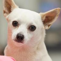 Adopt A Pet :: McIntyre - Cartersville, GA