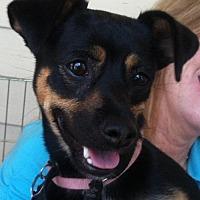 Adopt A Pet :: Covey - Davis, CA