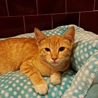 Adopt A Pet :: BUSTER - Lakewood, CA