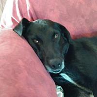 Adopt A Pet :: Bing - Jetersville, VA