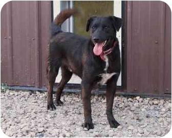 Labrador Retriever Mix Dog for adoption in Morden, Manitoba - Buddy