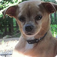 Adopt A Pet :: Cruise - COURTESY POSTING - Milford, CT