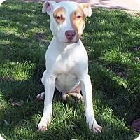 Adopt A Pet :: Sheldon - Tinton Falls, NJ