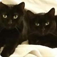 Adopt A Pet :: Lady - Merrifield, VA