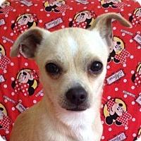 Adopt A Pet :: LENNY - Santa Monica, CA