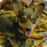 Adopt A Pet :: Carman - Osteen, FL