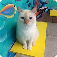 Adopt A Pet :: Sweetie Pie - Newport Beach, CA
