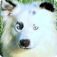 Adopt A Pet :: LANCE & MINNIE(PLS READ-SO SAD - Wakefield, RI