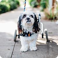Adopt A Pet :: Fast Edwina - Los Angeles, CA