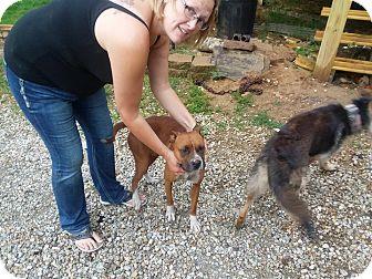 Boxer Mix Dog for adoption in Iowa, Illinois and Wisconsin, Iowa - Zoe