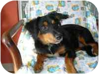 Gordon Setter Mix Dog for adoption in Folsom, Louisiana - Ernie