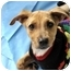 Photo 2 - Catahoula Leopard Dog Mix Puppy for adoption in Pasadena, California - ANGEL