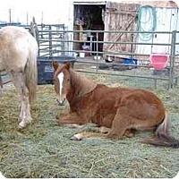 Adopt A Pet :: LuLu - Durango, CO