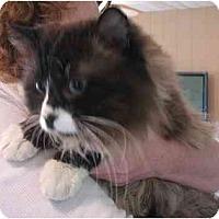 Adopt A Pet :: Carlisle - Davis, CA