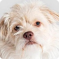 Adopt A Pet :: Clancy - Milan, NY