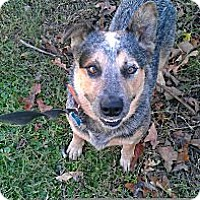 Adopt A Pet :: Finn - Conway, AR