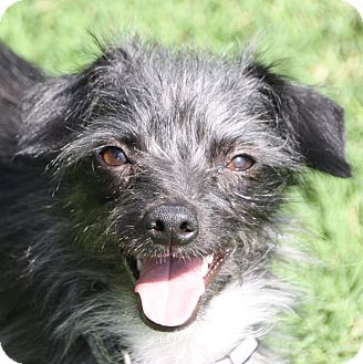 Terrier (Unknown Type, Small) Mix Dog for adoption in Edmonton, Alberta - Crosby