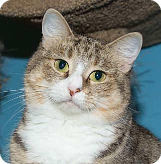 Domestic Mediumhair Cat for adoption in Seville, Ohio - Autumn-FEE WAIVED