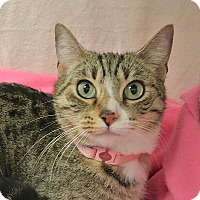 Adopt A Pet :: Holly - Foothill Ranch, CA