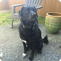 Adopt A Pet :: Jacks - Kingston, WA
